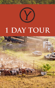 1 Day Tour button